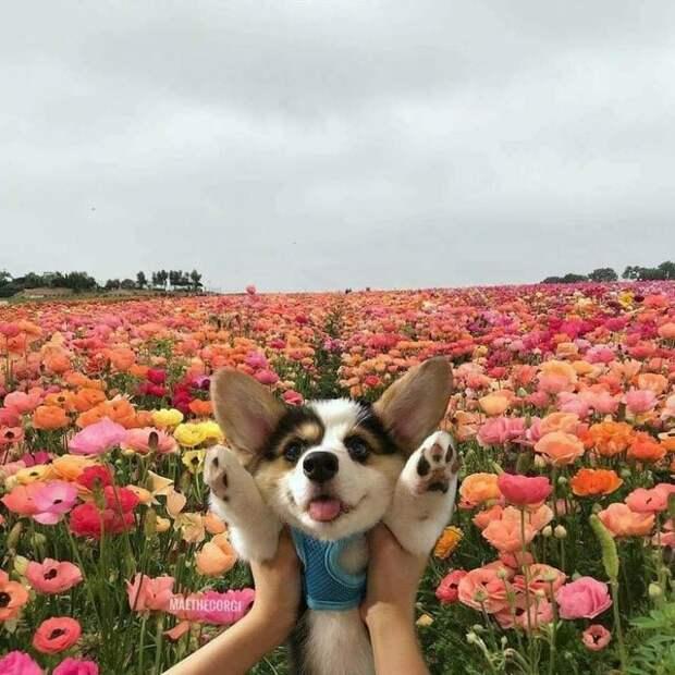 20 супер-мимимишных фотографий, которые вызовут у вас восторг