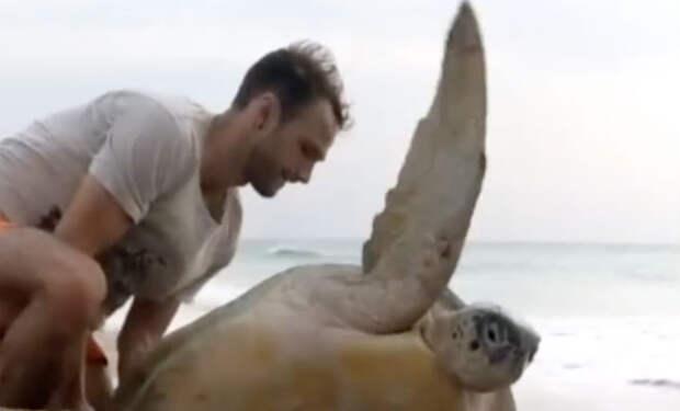 Люди помогли черепахе