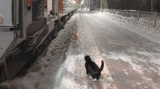 Каждый вечер ровно в 22:40 кот приходит на перрон и ждёт прибытия поезда… И так уже несколько лет!