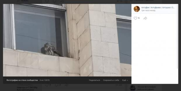Фото дня: сова заглянула в окно дома на Алтуфьевке