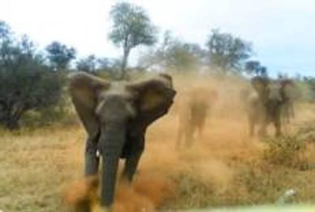 В Зимбабве слон растоптал туристку из Германии