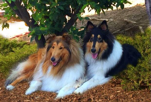8 пород собак, которые успокоят даже самого эмоционального человека