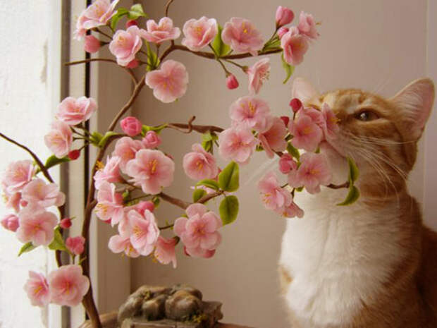 Мастер-класс цветы сакуры из холодного фарфора