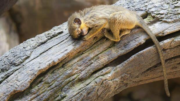 Just a Sleeping Monkey by Goran Petrov on 500px.com