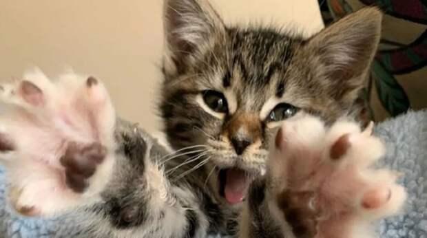 Малютка-кошечка тянет лапки, чтобы кого-то обнять. После жизни на улице она жаждет любви и тепла