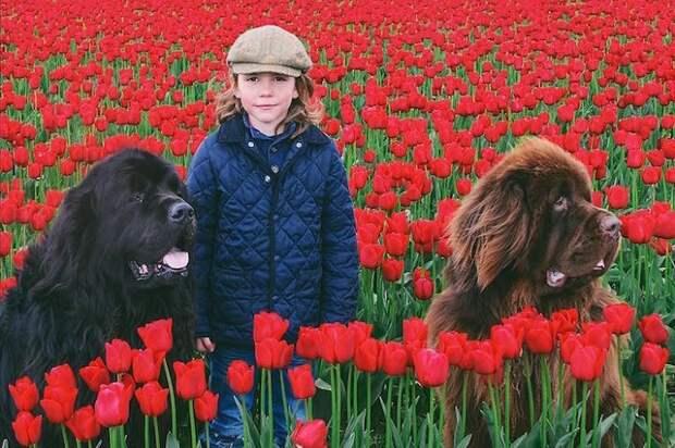 Джулиан с двумя домашними ньюфаундлендами.