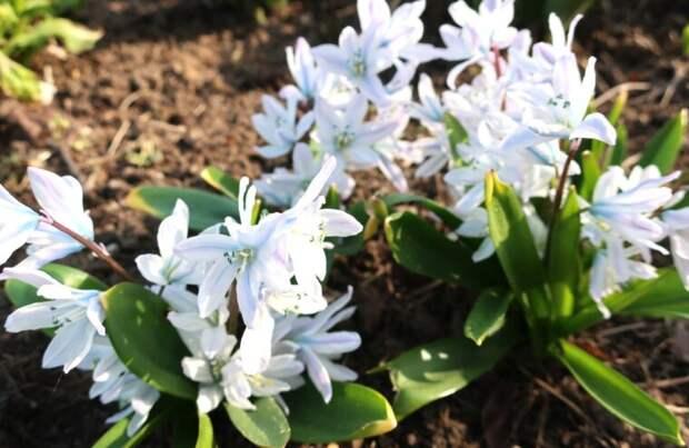 В Твери в дворцовом саду цветы пробудились от зимнего сна