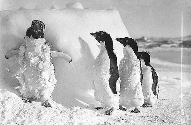 Самые впечатляющие фотографии Антарктиды начала XXвека