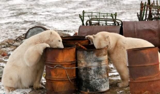 Прибирать Арктику будут осужденные преступники