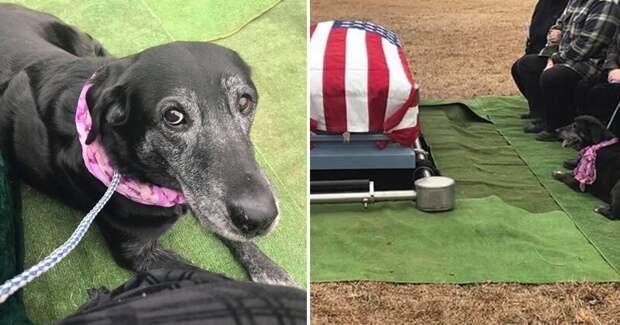 Собака доказала хозяину свою любовь до гроба Любовь, верность, животные, мило, смерть хозяина, собака и хозяин, собаки, трогательно