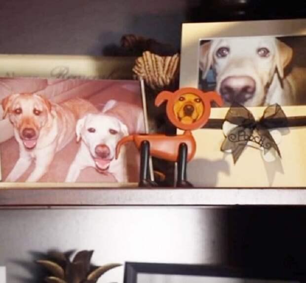 Фото с собакой