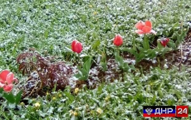 МЧС ДНР предупреждает жителей о предстоящих ночных заморозках