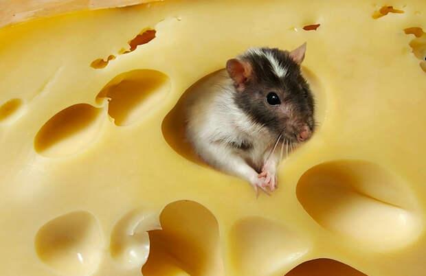4 эксперимента с мышами, которые еще больше раскроют человеческую сущность