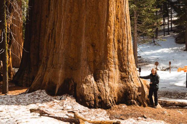 Национальный парк «Секвойя» в Калифорнии