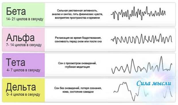 Ритмы человеческого мозга