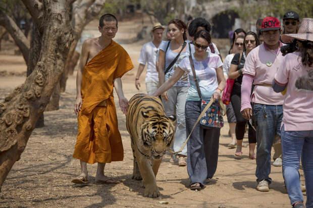 Монах, тигр и туристы, Таиланд