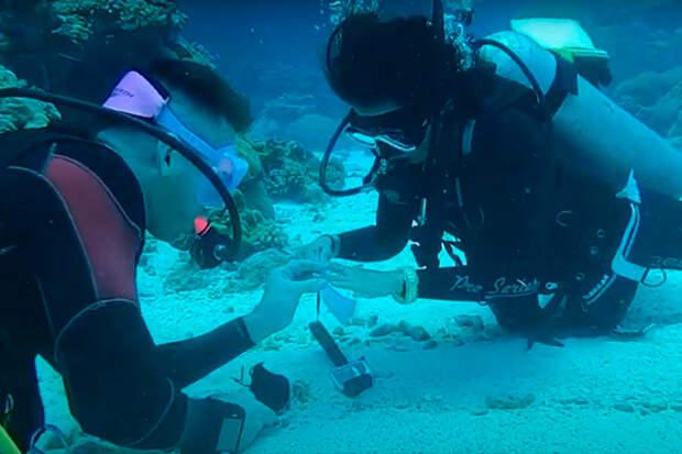 Австралийский дайвер сделал предложение девушке на дне океана