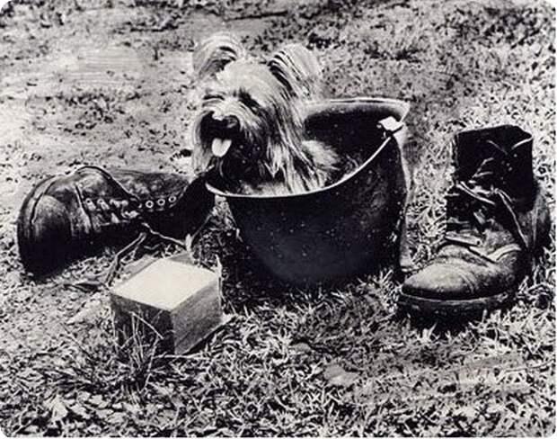 Животные во Второй мировой.