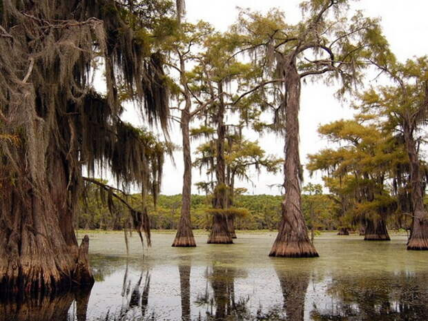 Фантастические кипарисы на озере Каддо, создающие иллюзию потустороннего мира