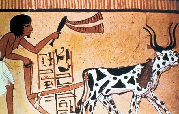 Факты о Древнем Египте, которые удивят вас не меньше снега в июле