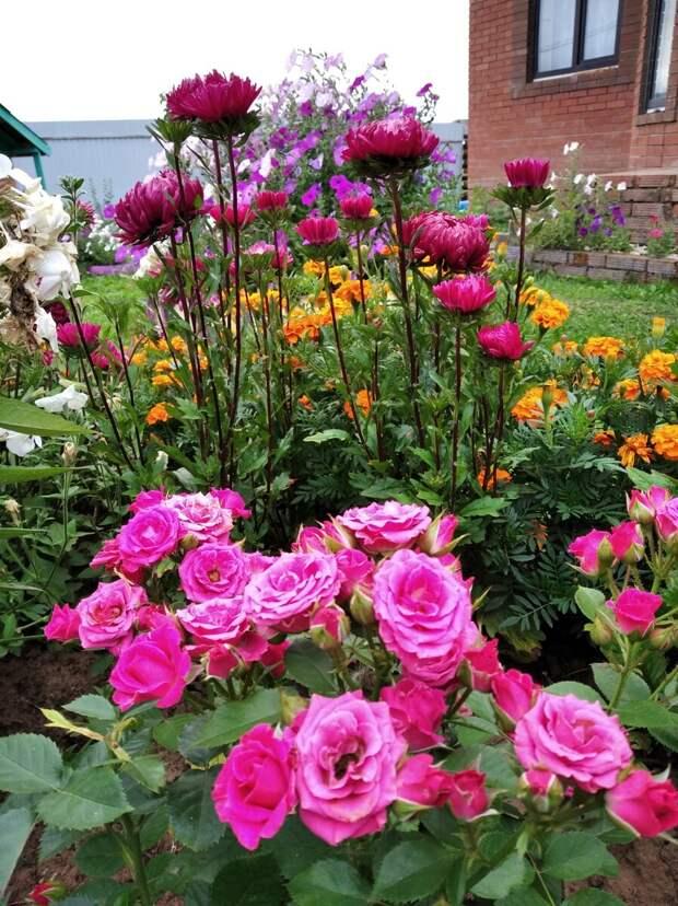 Миниатюрные розы идеальны для оформления клумб