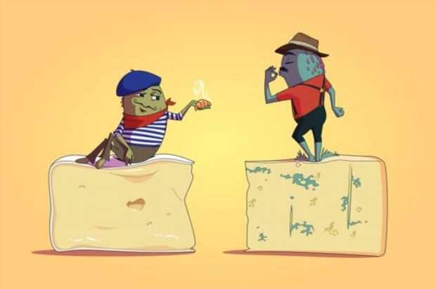 12 фактов о поражающем воображение микромире, скрытом от наших глаз