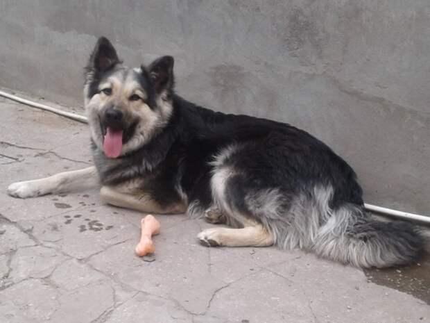 Облезлый щенок одиноко проводил свои дни на крыше дома взросление, история, крыша, приют, собака, щенок