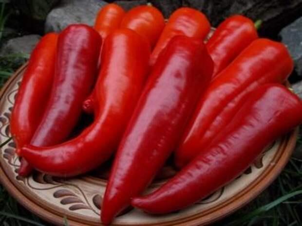 Стручковый перец и его полезные и лечебные свойства