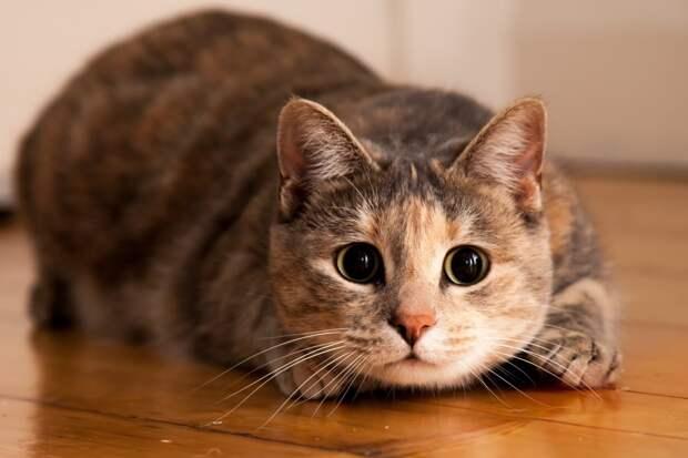 Если бы кот заговорил, он бы вскричал, что терпеть такого не может