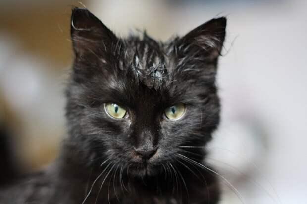 «Не нужно мне никаких праздников, давайте только его оставим!»: за несколько дней до десятилетия девочка притащила домой котёнка