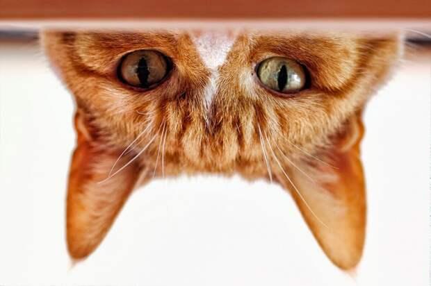 Шпионский кот следит за тобой
