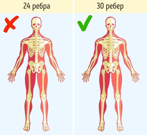10 ошибок в строении человеческого тела, которые создают нам немало проблем