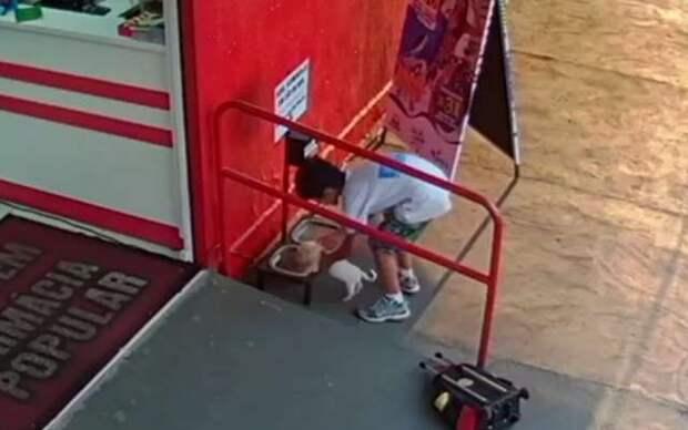 ребенок кормит щенка