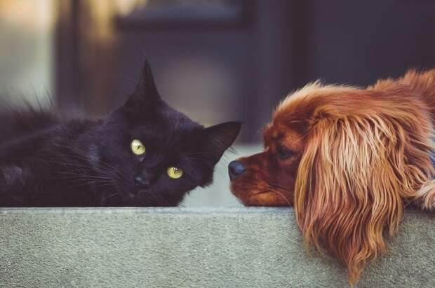 В Думу внесён законопроект об ограничении числа животных в квартире