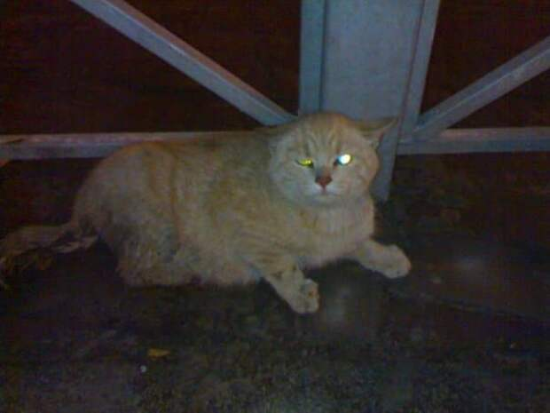 Больного кота приходилось кормить в перчатке, ведь он был диким и злым. Но спустя месяц в семье МУРлыка преобразился