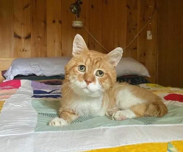Не зная, что хозяина уже нет среди живых, кот шел к его дому 8 лет
