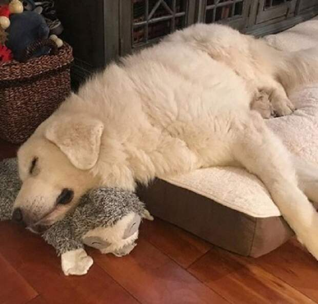 Пес уснул