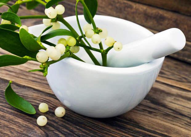 Омела белая - ядовитое растение, при самолечении может навредить здоровью