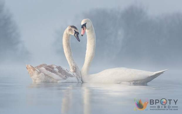 Diana Schmies / ©Bird Photographer of the Year 2021