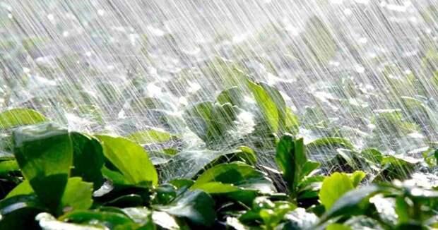 На Кубани 30 июня и 1 июля возможны сильные дожди и град