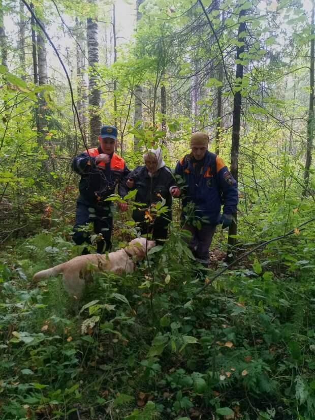В Удмуртии сутки блуждавшую в лесу пенсионерку нашли волонтеры с собакой