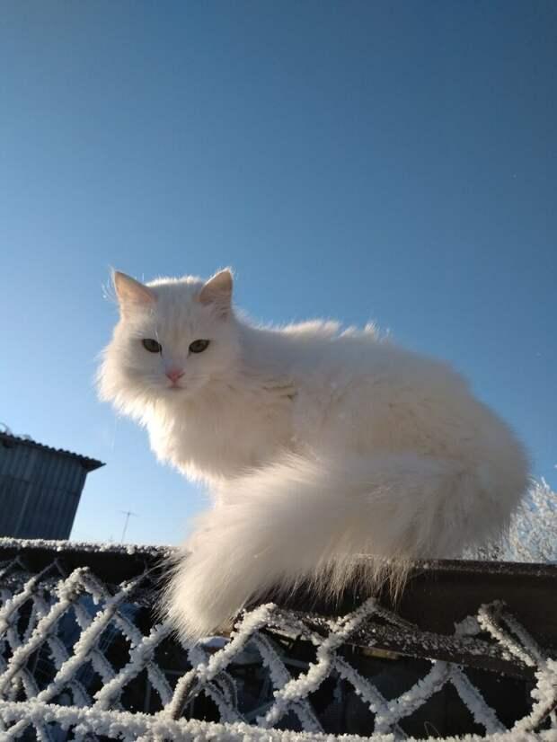 Красота! город, домашние животные, забор, кот, кошка, село, улица, эстетика