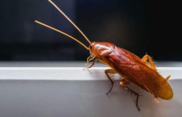 Что произойдет, если тараканы полностью вымрут?