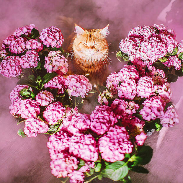 """Рыжий кот по имени """"Котлета"""" покоряет интернет"""