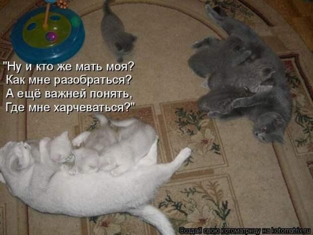 Уморительные котоматрицы для отличного настроения