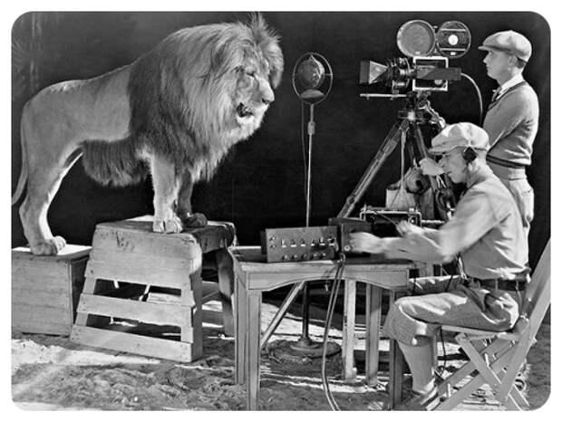 Незавидная судьба львов-артистов.