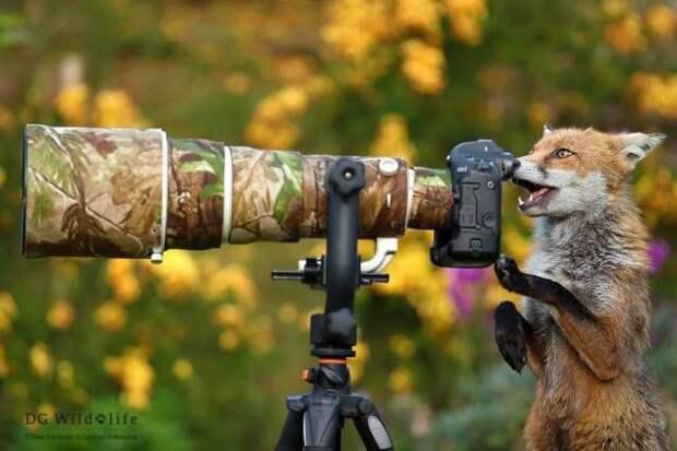 Смешные картинки и веселые фото приколы из жизни (11 фото)