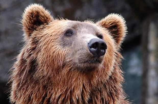 На базах отдыха в Сочи закроют мини-зоопарки с хищниками