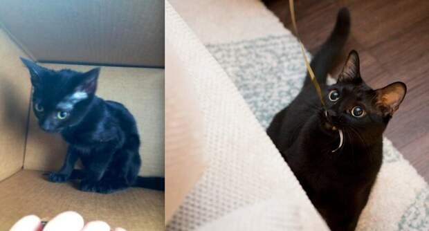 11. «Мне пришлось уговаривать жену, чтобы оставить у нас этого красавчика» до и после, добро, домашний питомец, животные, забота, кошки, люди, собаки