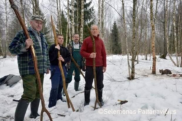 Добровольцы пошли в лес, чтобы спасти дикую рысь, попавшую в петлю